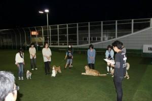 s_dog-2